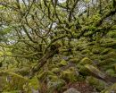 http://www.worldphotographyforum.com/gallery/data/2/thumbs/Dartmoor2.jpg