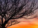 branches_silhouette_r.jpg