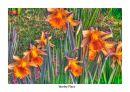 http://www.worldphotographyforum.com/gallery/data/505/thumbs/daffer-14march.jpg